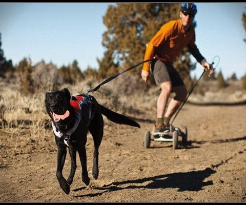Image Result For Mountain Board Dog Pulle Sporting Dogs Dogs