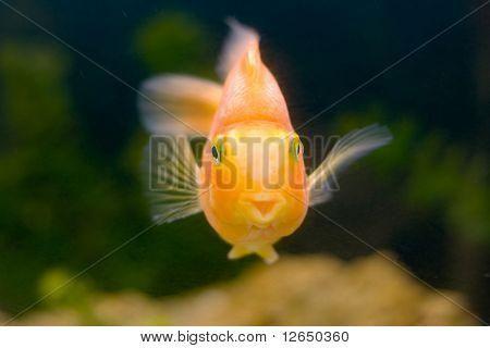 http://colorandchroma.com/catalog/murals/?s=gold+fish
