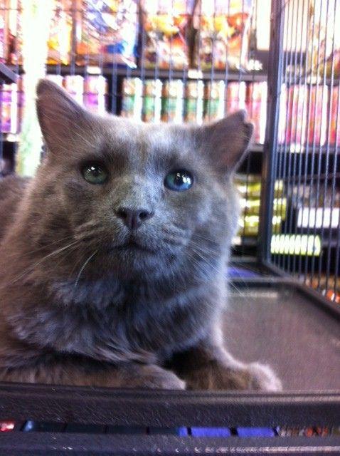 Amazing Adoptables Cat Adoption Cats Dog Cat