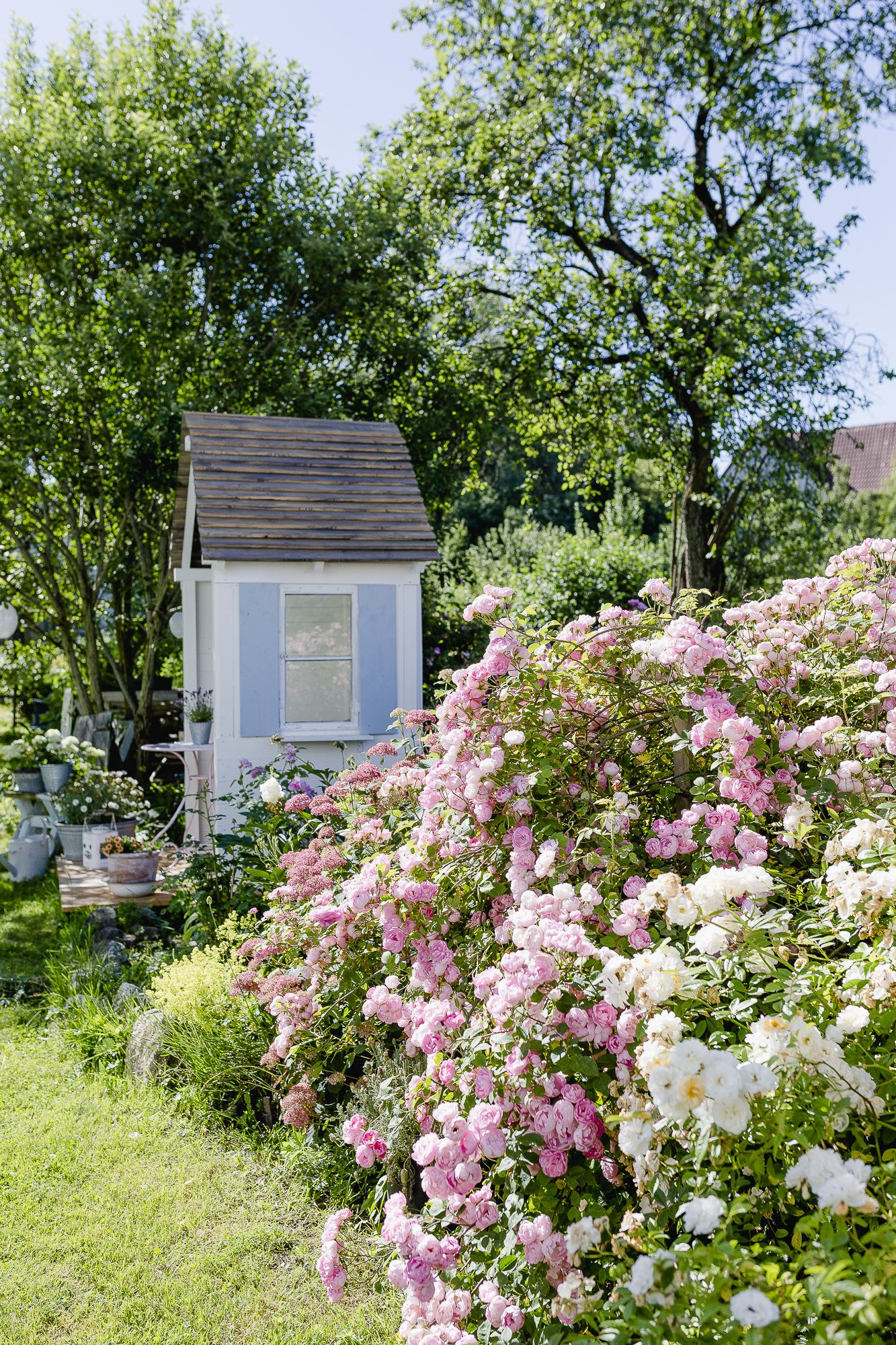 Mediterraner Flair Und Sommer Auf Der Terrasse Pomponetti Mediterrane Pflanzen Wohnen Und Garten Garten Pflanzen