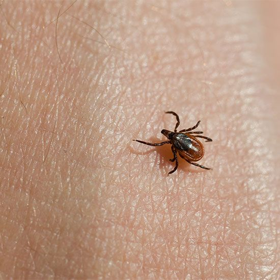 Repel Ticks With This Sulfur Remedy Natural Health Lyme Ticks