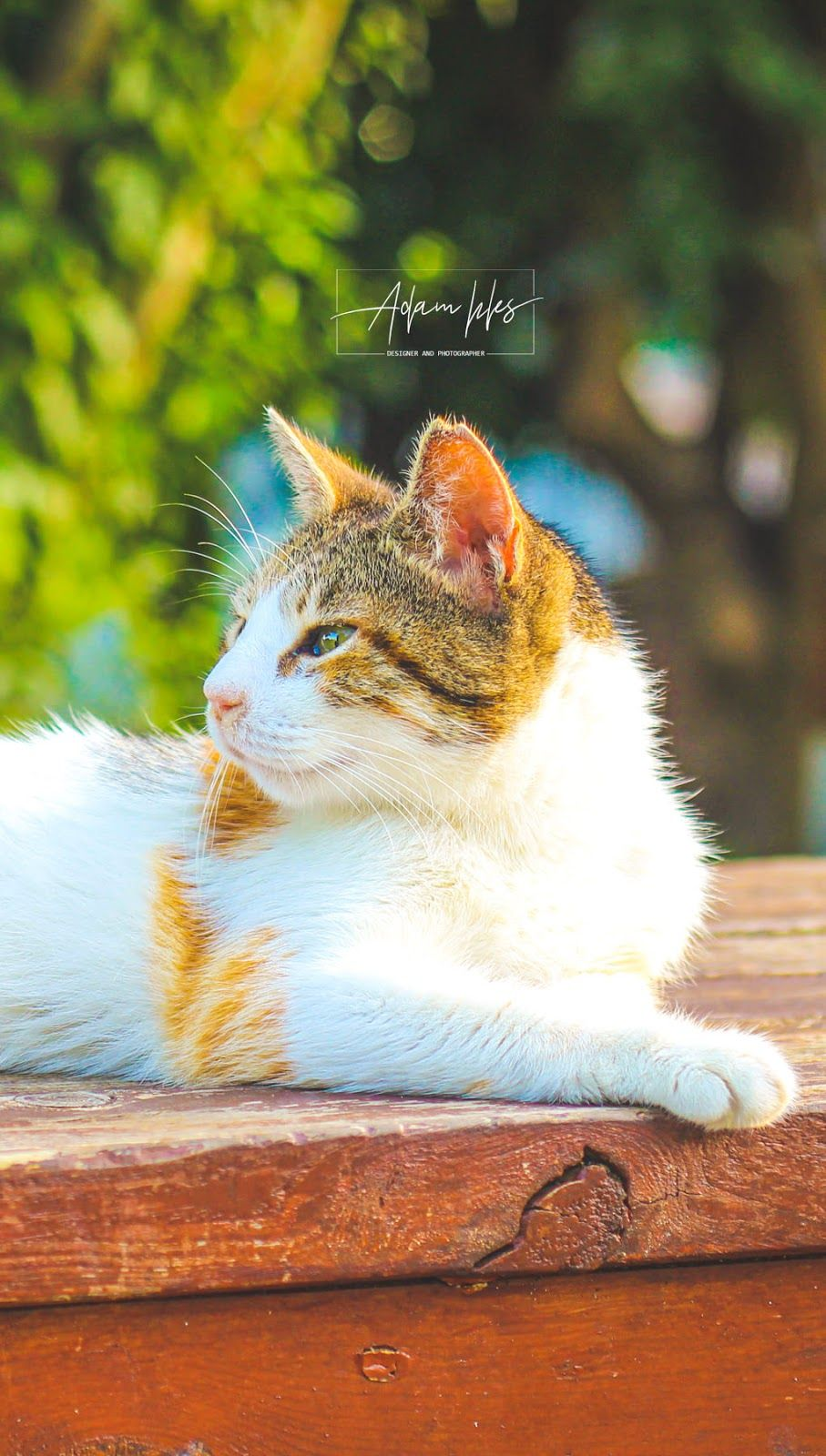 اجمل خلفية هاتف قطة رائعة خلفيات هاتف بدقة عالية طبيعة وحيوانات Cats Animals Wonder