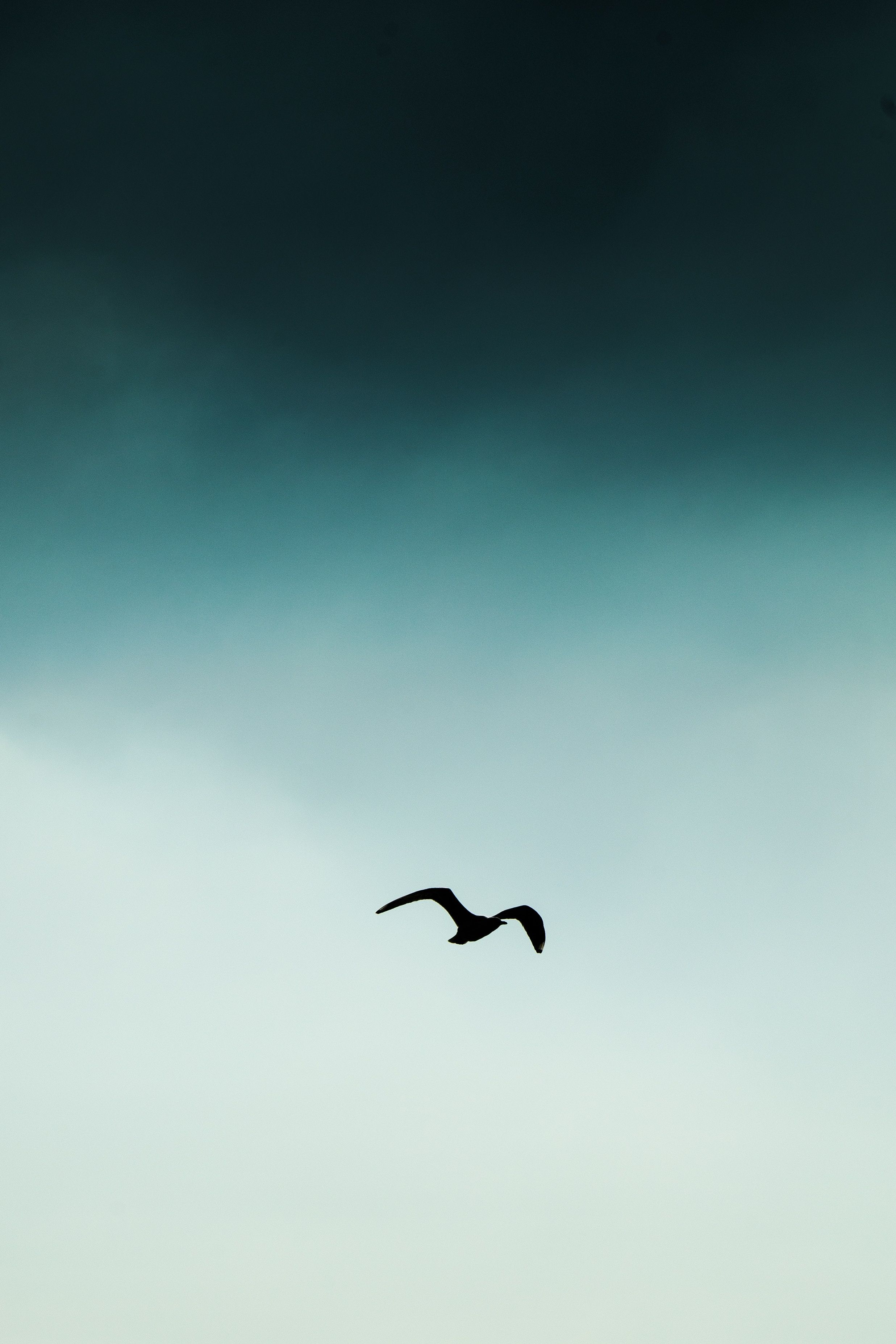 What Is Temporary And What Is Eternal Birds Flying Photography Birds In The Sky Sky Photography