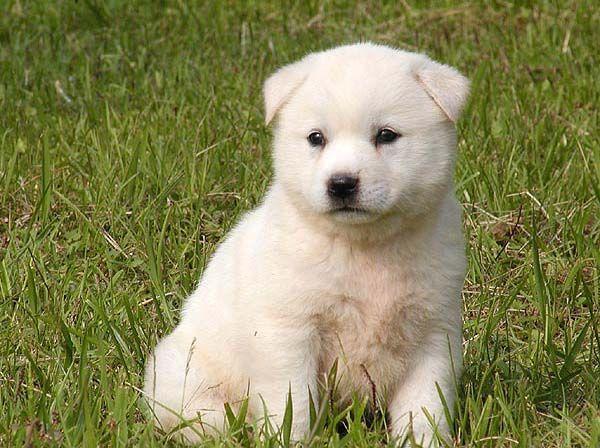 Fantastic Korea Chubby Adorable Dog - 02870f989644edece6e9db73d1106a0b  HD_9410053  .jpg