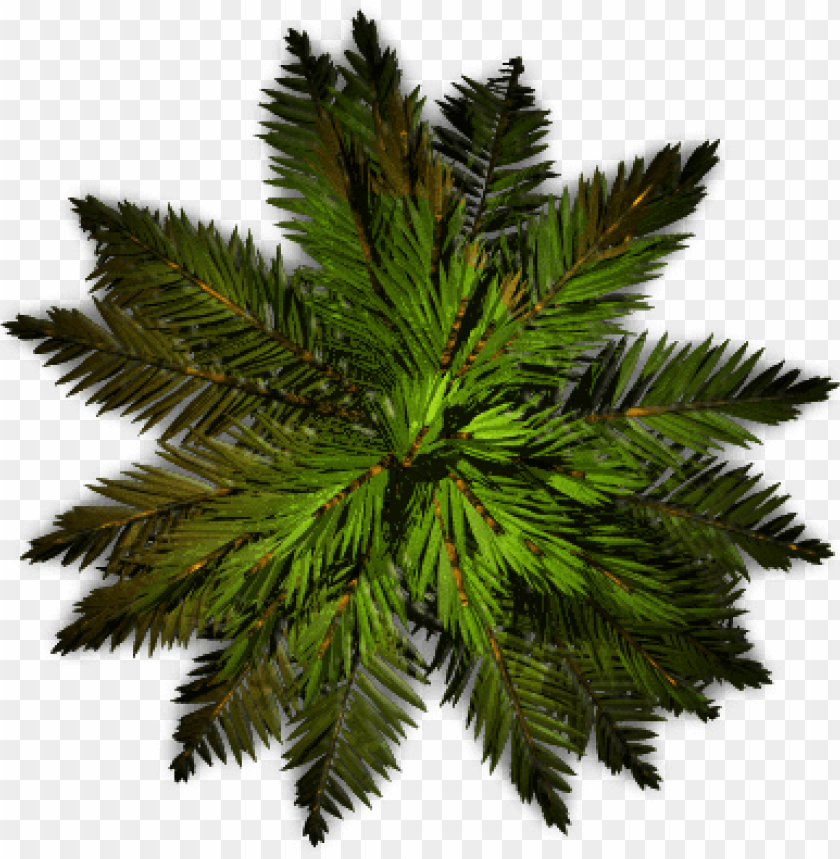 Alm Tree Top View Png Pond Pine Png Image With Transparent Background Png Free Png Images Trees Top View Tree Tops Tree Photoshop
