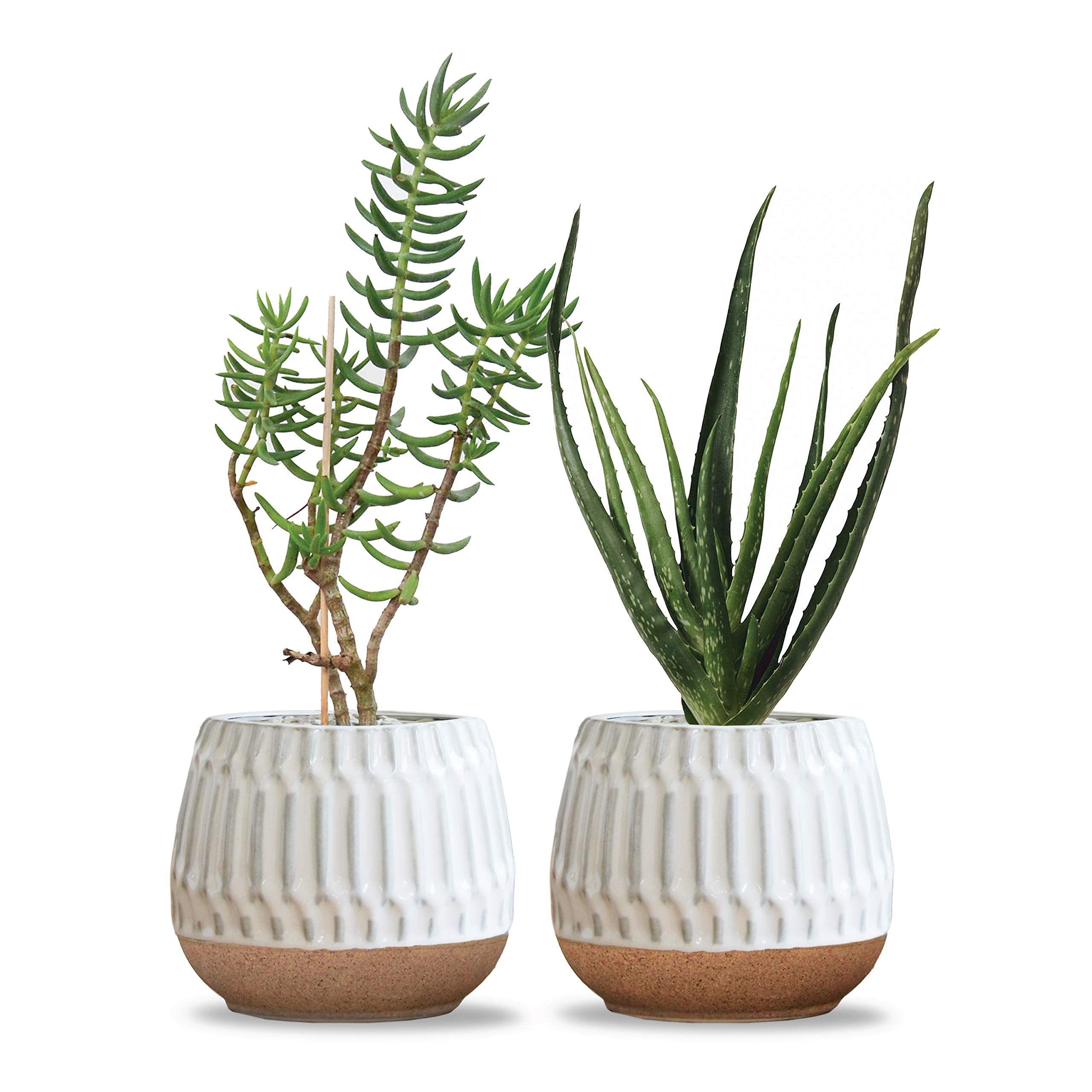 Carlton lane valencia ceramic indoor flower pots for