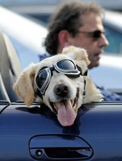 Doggles!