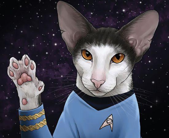 Who Wore It Better Trek Cats Edition Cat Art Jenny Park Cats