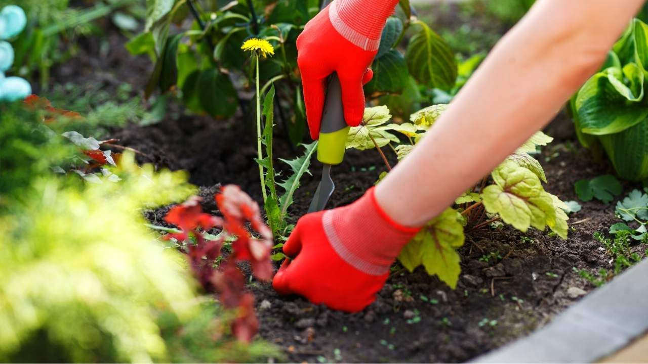 How To Keep Weeds Out Of Raised Garden Beds - Extremely Easy Methods | Slick Garden