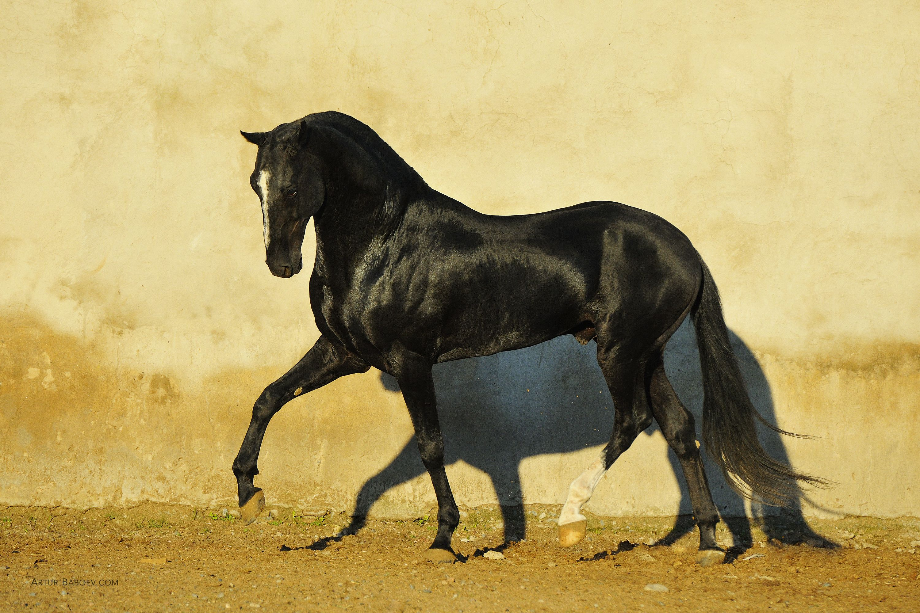 Must see Wallpaper Horse Akhal Teke - 028bbf60c44b4e476255c35ff6d61fd3  You Should Have_224676.jpg