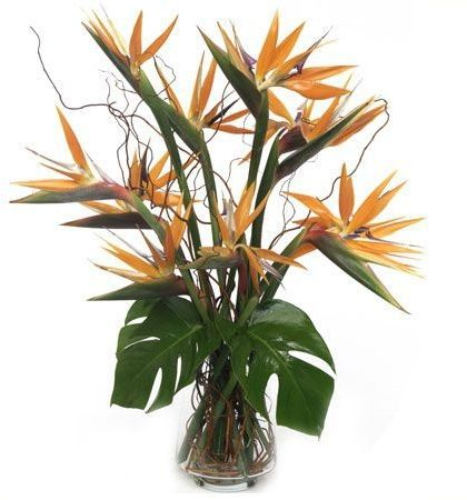 Paradise Birds Of Paradise Flower Get Well Flowers Paradise Flowers