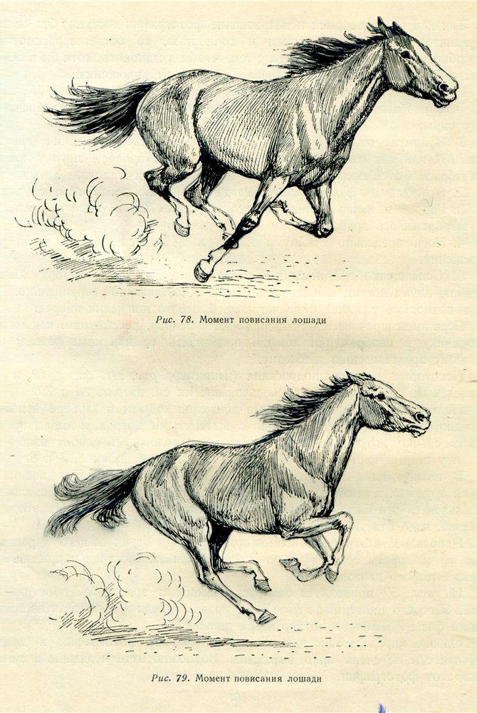 Курсы рисования для взрослых. Урок: лошадь в движении ...
