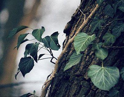 """다음 @Behance 프로젝트 확인: """"Cinemagraphs / Animated photography - Nature Motion 2"""" https://www.behance.net/gallery/14084803/Cinemagraphs-Animated-photography-Nature-Motion-2"""
