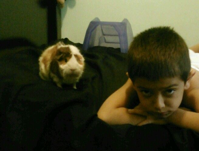 While cleaning my room I look at my bed and find this..my brother and guinea pig staring intensly lmao!