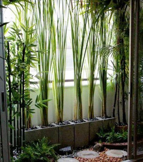 En Guise De Paravent, Vous Pouvez Essayer Le Bambou Ou Toute