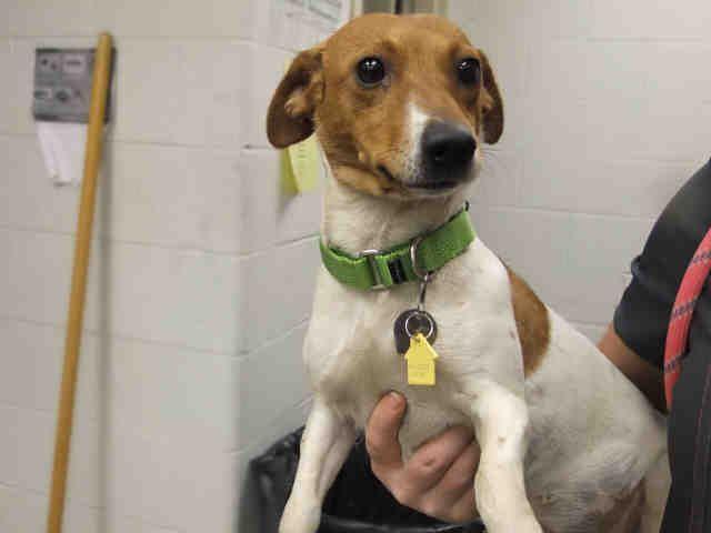 St Louis Pet Adoption Humane Society Adoption Pet Adoption