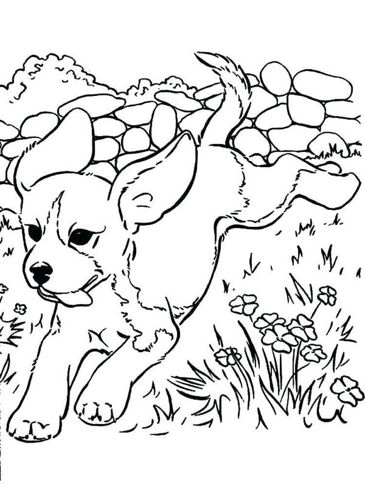 Anime Puppy Coloring Pages Puppies Are Small Dogs Puppies Are Animals That Love To Socialize And Puppy Coloring Pages Dog Coloring Page Animal Coloring Pages