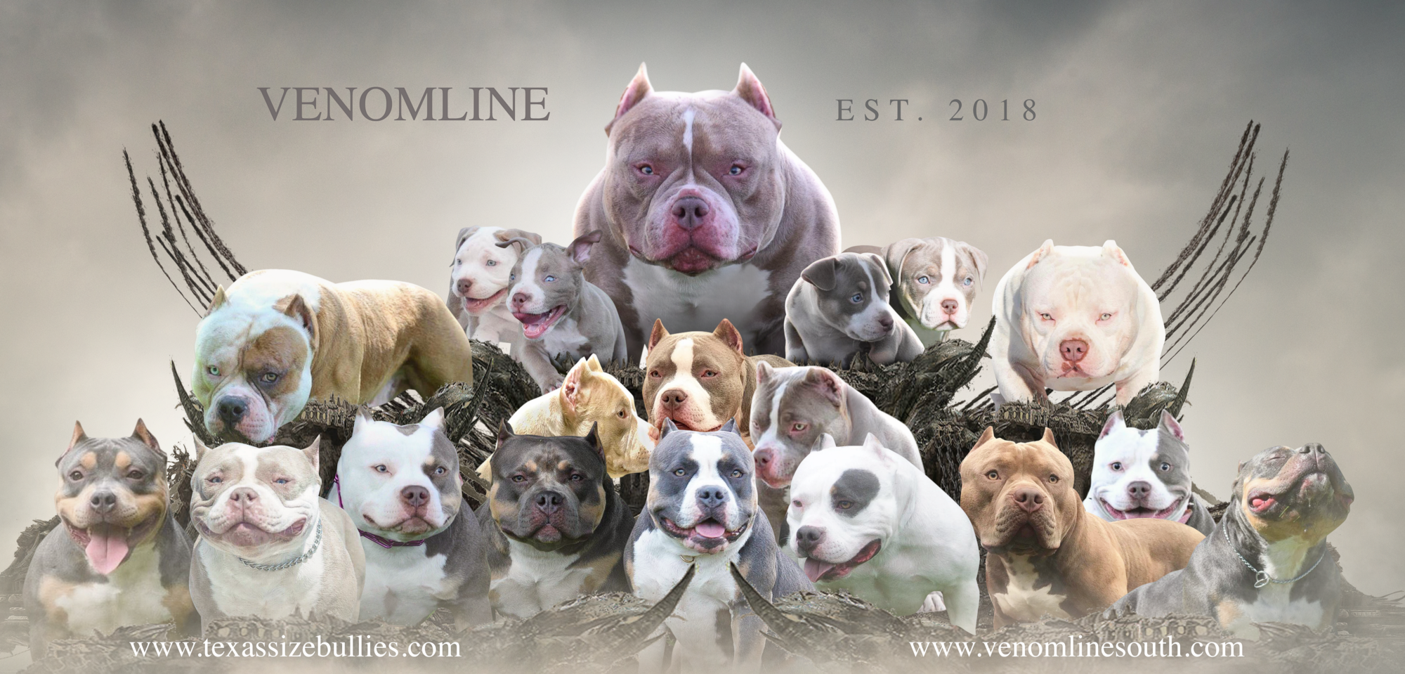 Louis V Line S Venom Meets Magoo Lucky Luciano Puppies Now Available For Sale Pocket Bully American Bully Bully Breeds