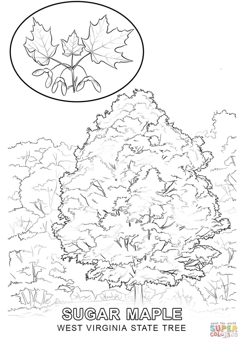 West Virginia State Tree Coloring Pages West Virginia Map
