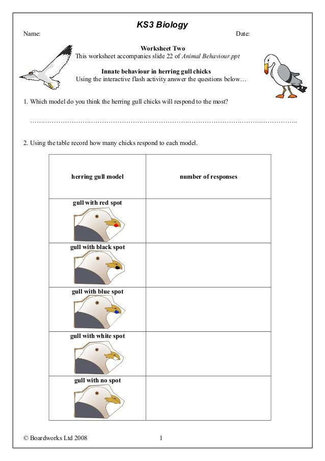 Ks3 Boardworks Biology Animal Behaviour Worksheet 2 Plant Cell