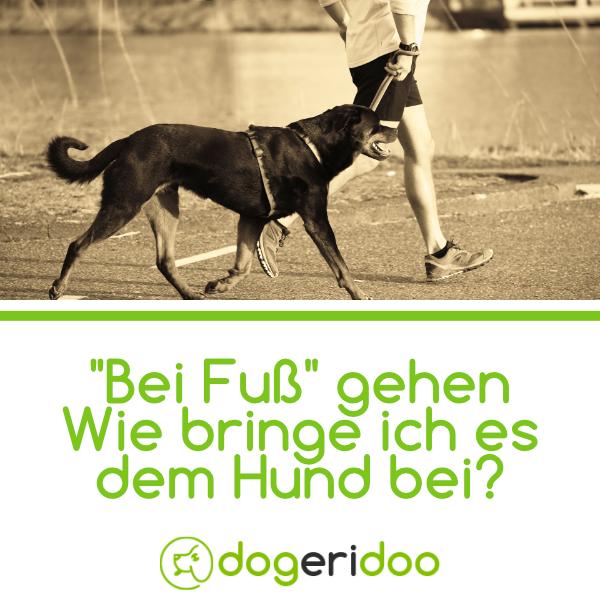 Bei Fuss Sinnvolles Kommando Oder Doch Eher Unnotig Dogeridoo Hunde Hundchen Training Hunde Welpen Erziehung