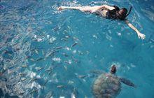 Em Barbados é possível nadar com tartarugas! Acredite: isso é muito especial, experiência fantástica!