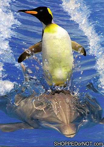 No time to explain, just get on the dolphin!!