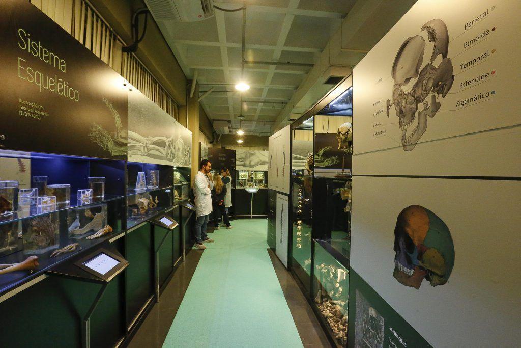 Instituto de Ciências Biomédicas reabre Museu de Anatomia Humana