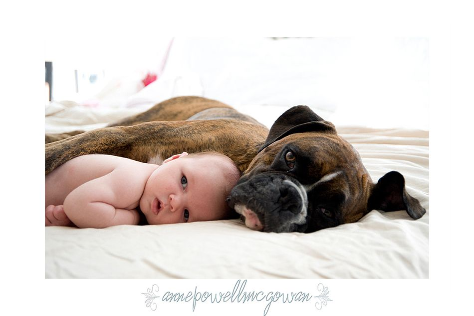 Gracie & Catfish - Only a baby has more cute power than a Boxer!