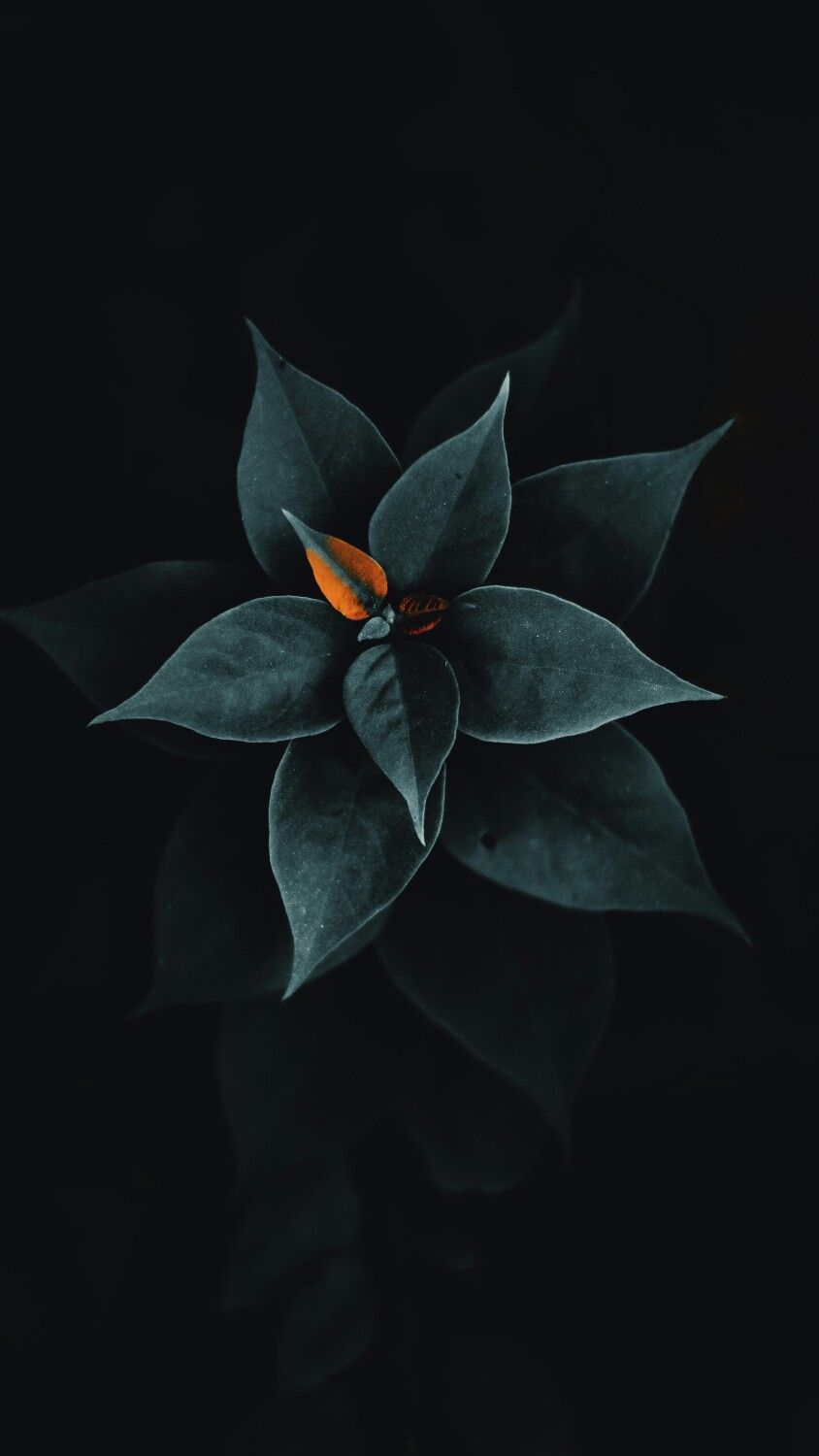 Latest List Of Great Black Lock Screen For Iphone X In 2020 Flowers Black Background Black Background Photography Leaves Wallpaper Iphone