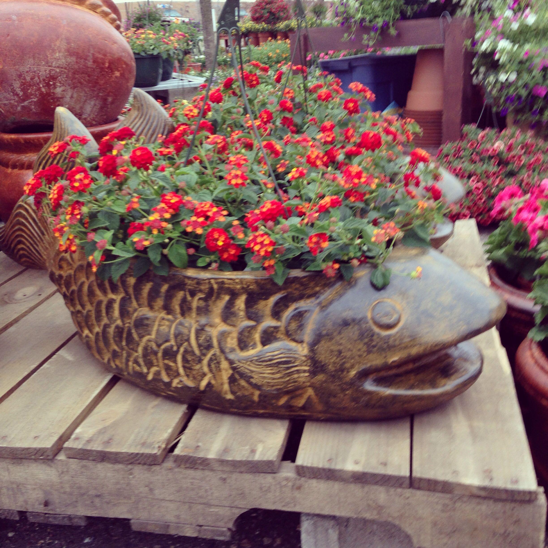 fancy design ceramic plant pots. Large ceramic fish flower pot with a lantana plant at our Maple Grove garden  market