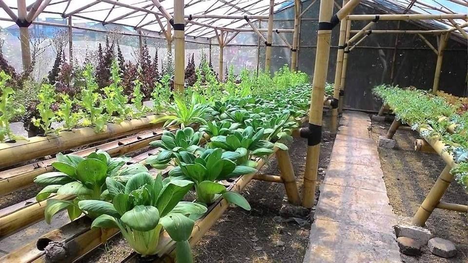 Teaching Organic Farming & Gardening