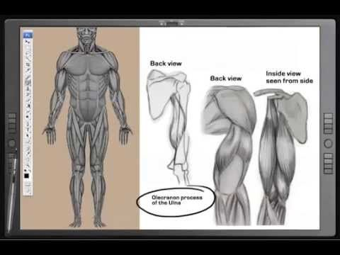 Complete Art Course On Human Anatomy Youtube Sculpting Tutorials
