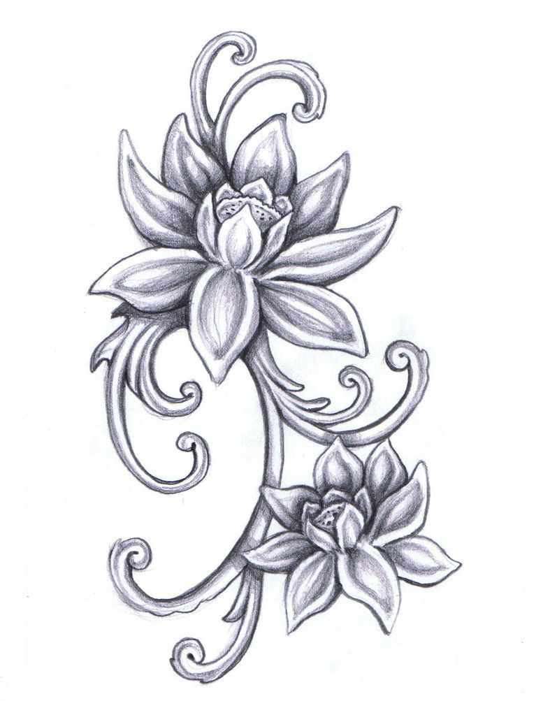 Lotus Flower Drawings For Tattoos Violas Lotus Flower By Mary