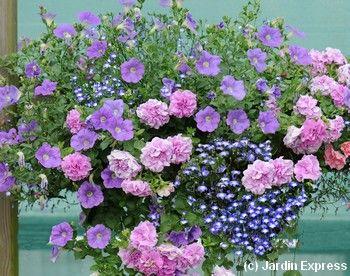 5 compositions pour une jardini re fleurie l t prochain suspension jardini res et jardins - Idee composition jardiniere exterieure ...