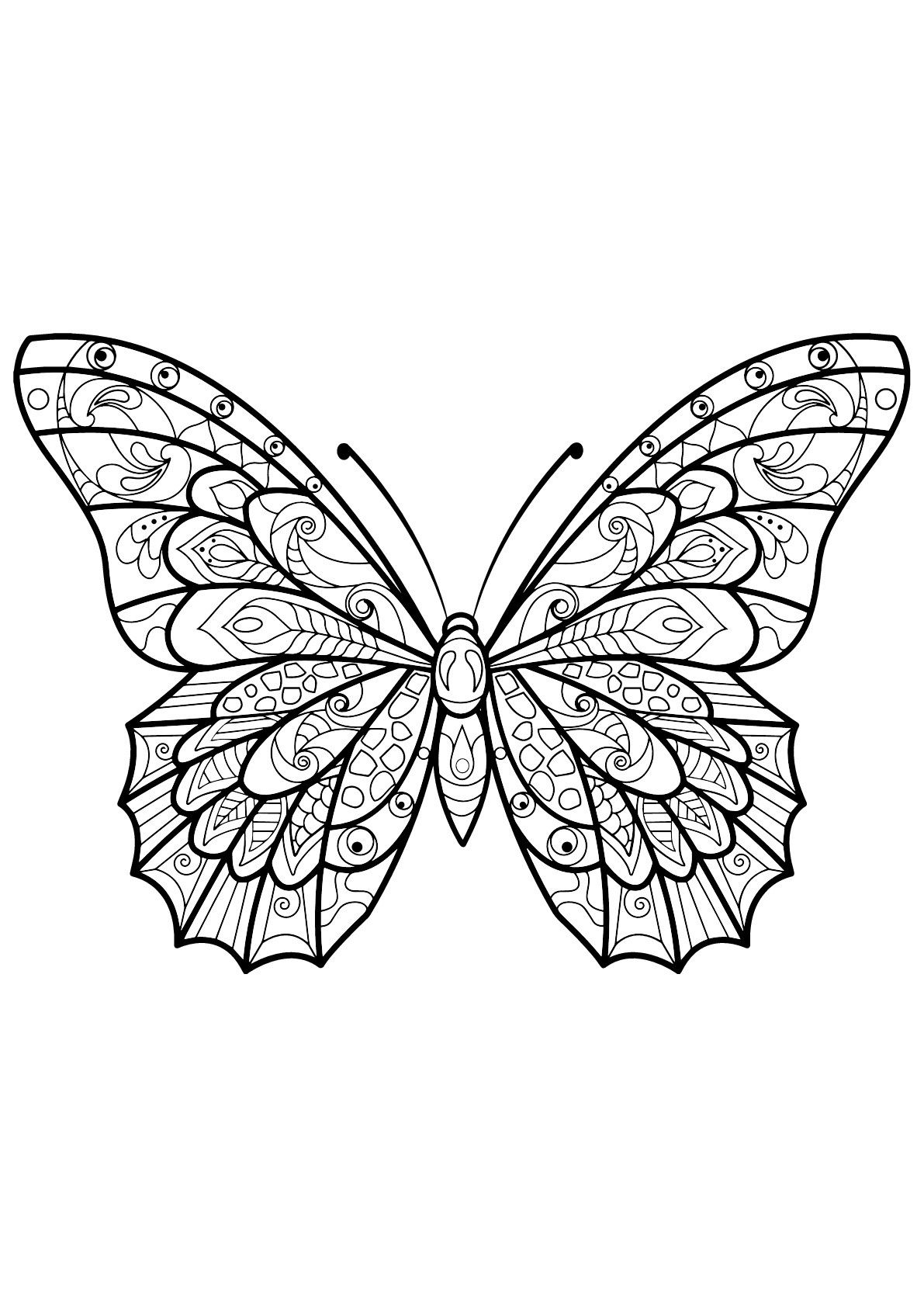 Butterfly Wing Coloring Page Youngandtae Com Insect Coloring Pages Butterfly Coloring Page Butterfly Drawing
