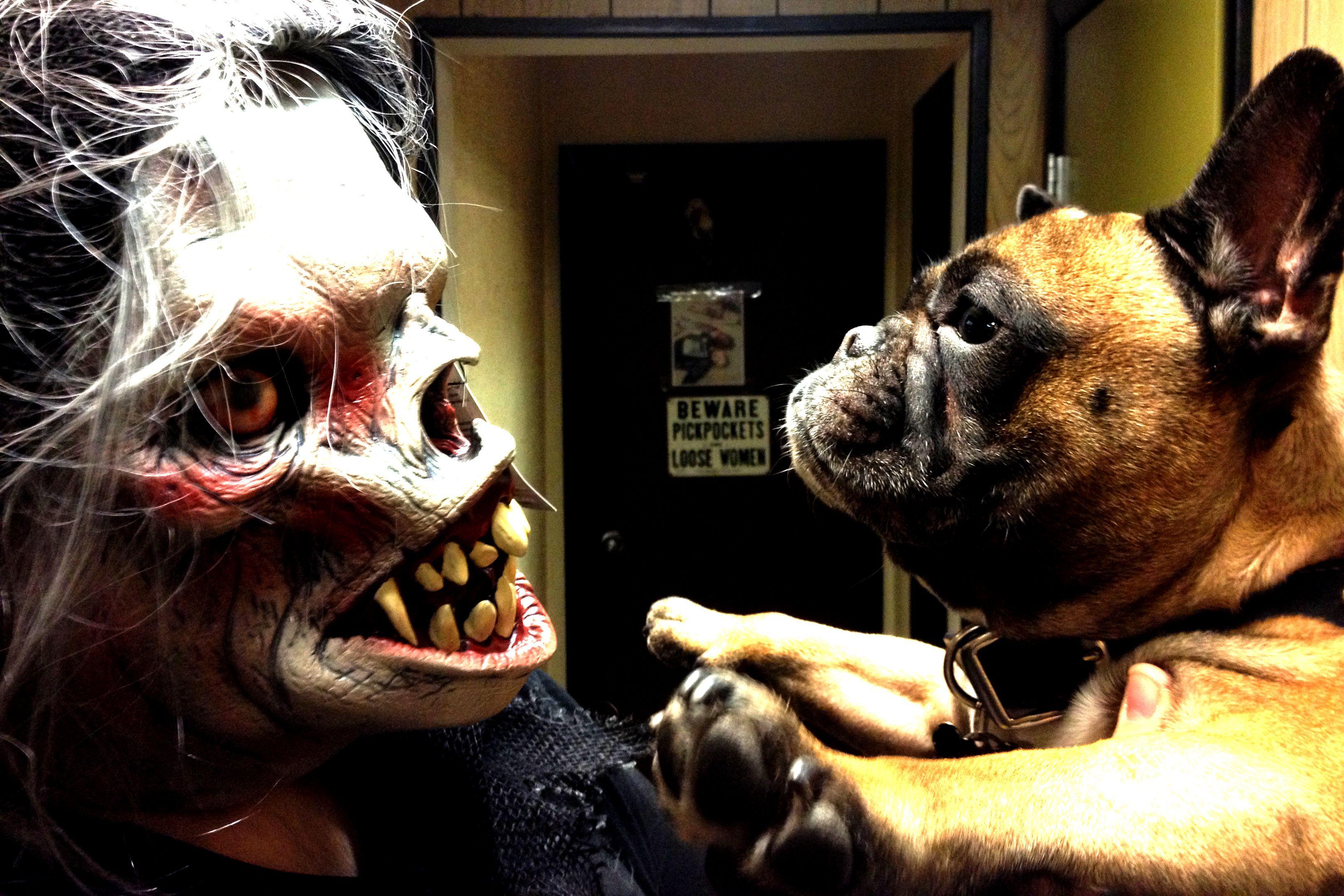 Hooded Space Imp Hoods Half Mask French Bulldog