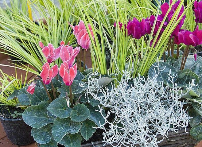 23++ Fleurs d ete pour jardiniere inspirations
