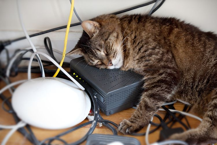 How To Make Your Cat Stop Chewing Electrical Cords Cat Behavior