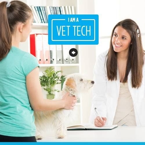I M A Vet Tech Vet Tech Veterinarians Medicine Vet Medicine
