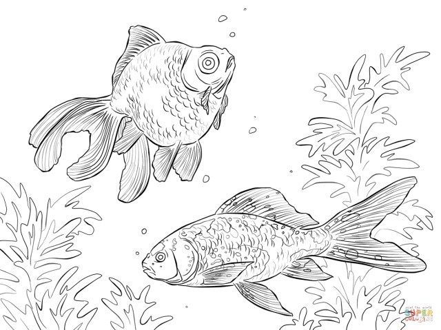 27 Best Photo Of Goldfish Coloring Page Animal Coloring Pages