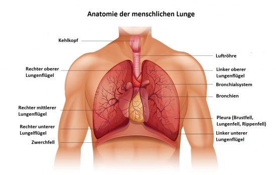 Die Lunge und was sie mit dem Gefühl Traurigkeit verbindet ...