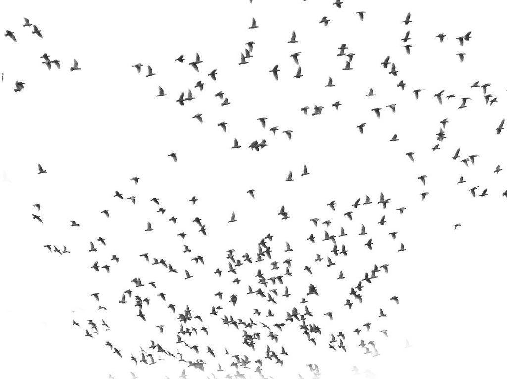 Los pájaros vuelan juntos Naturaleza