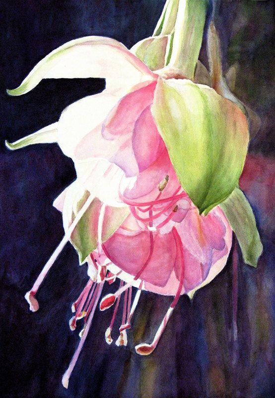Fuchsia Original Watercolor By Gail Dorfman Floral Watercolor