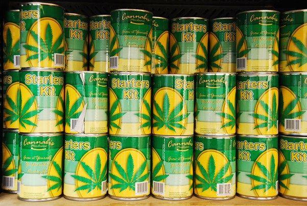 Growing Marijuana Cannabis Starter Kit Holland Amsterdam Netherlands