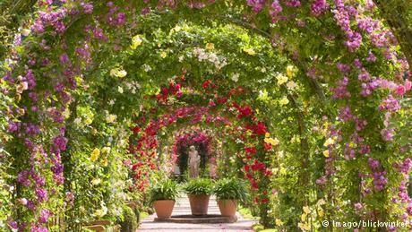 Un jardín de rosas con historia de amor