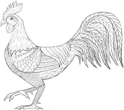 rooster coloring page google search - Rooster Coloring Page