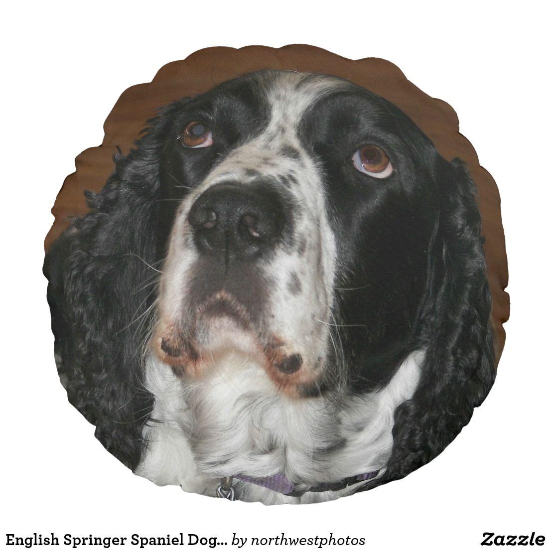 English springer spaniel dog photo round pillow english