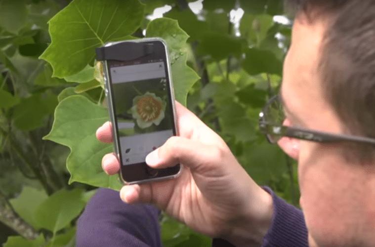L'application pour la détection des plantes