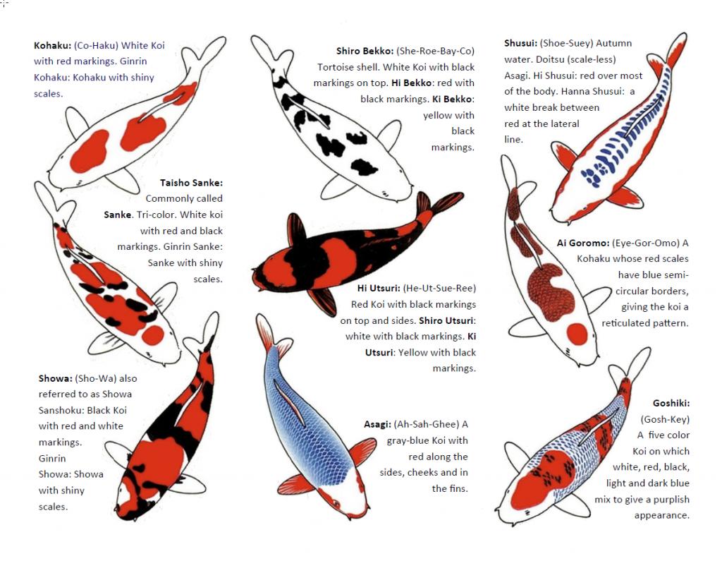 Downloadable Koi Chart Page 2 Koi Fish Tattoo Koi Fish Koi Fish Tattoo Meaning